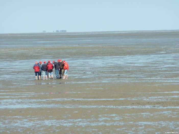 Wattenmeer Führung / guided tour in the mudflats