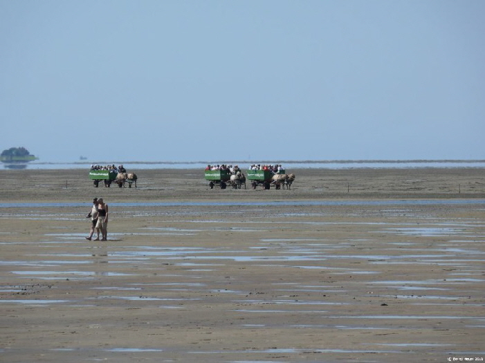 Kutschfahrt von Fühlehörn nach Südfall /horse-drawn carriage over the mudflats from Fuhlehörn,Nordstrand to the tiny isle of Südfall