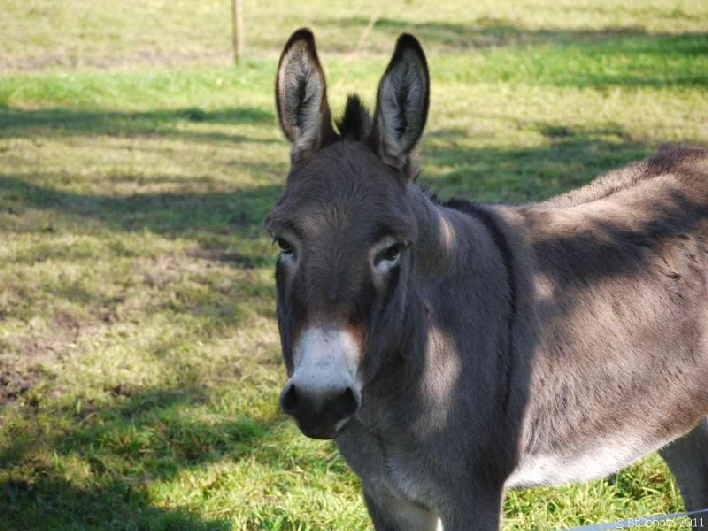 Ein Esel kommt selten allein / don't be in a hurry would this donkey say if he could